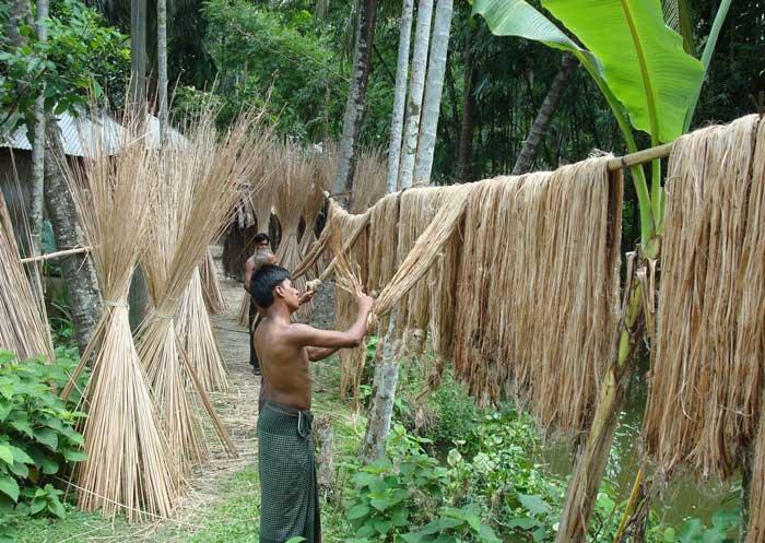 Cáñamo, la planta textil más antigua del mundo | El Cultivador ...